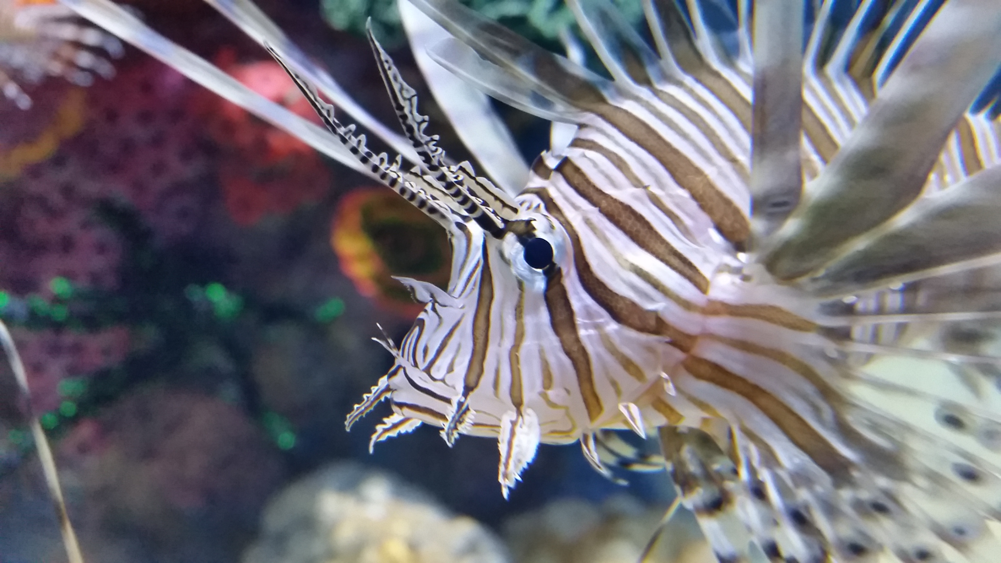 Lionfish Aquarium illuminated with ORSENSO's MARLIN 100-14K-S-10 IP67 LED